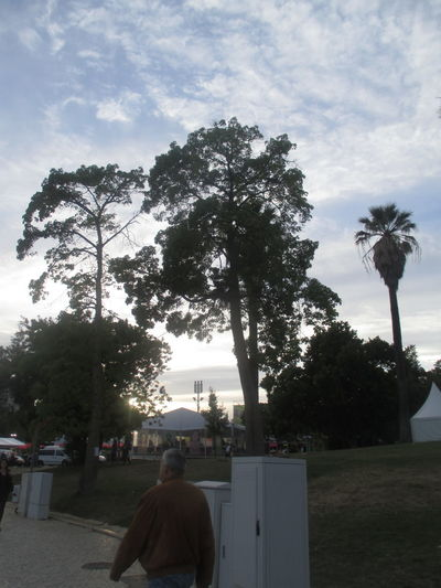 Afternoon In Lisbon Blue Sky And White Clouds Calm Afternoon Contrast Day Growth Landscape Lisbon Men Nature One Person Outdoors Palm Tree People Person Passing By Quiet Afternoon Quiet Afternoon Walj Quiet Lisbon Real People Rear View Sky Statue Tranquility Tree Urban Landscape