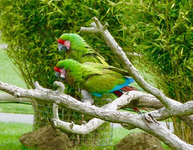 Parrots Whipsnade Zoo Parrot Bird Branch Perching Tree Multi Colored Animal Wildlife Macaw Nature Feather  Animals In The Wild One Animal Green Color Animal Themes Beauty In Nature No People Close-up Outdoors Cockatoo Day