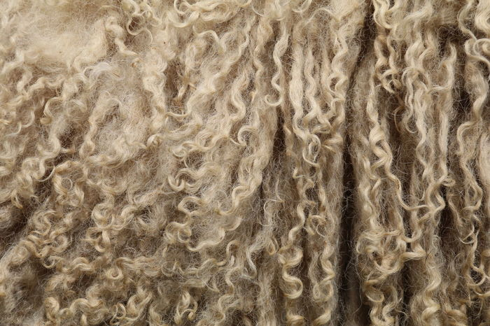 Animal Life Backgrounds Close-up Curls No People Pattern Sheep Texture Warmth Wool Perspectives On Nature