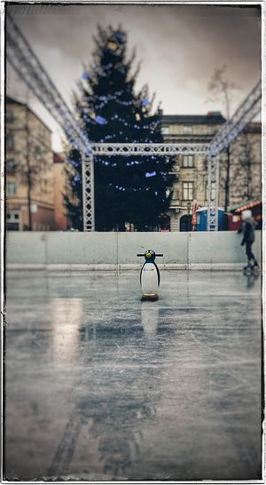 Lonely Bird Onice Iceskating Cold Temperature Winter_collection Winterfuckyou PenguinLove Littlefriend