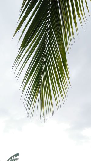 Tree Palm Tree Leaf Sky Close-up