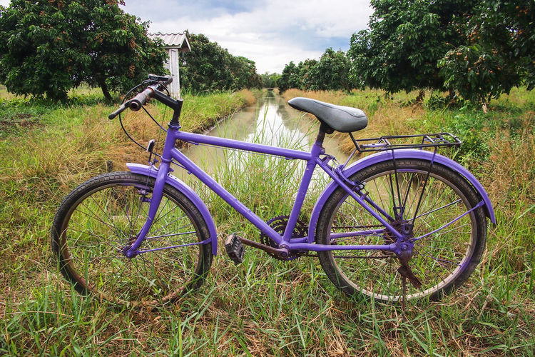 Bicycle in Longan Orchards Beauty In Nature Bicycle Ditch Grass Longan Fruit Nature Orchards Outdoors Tree