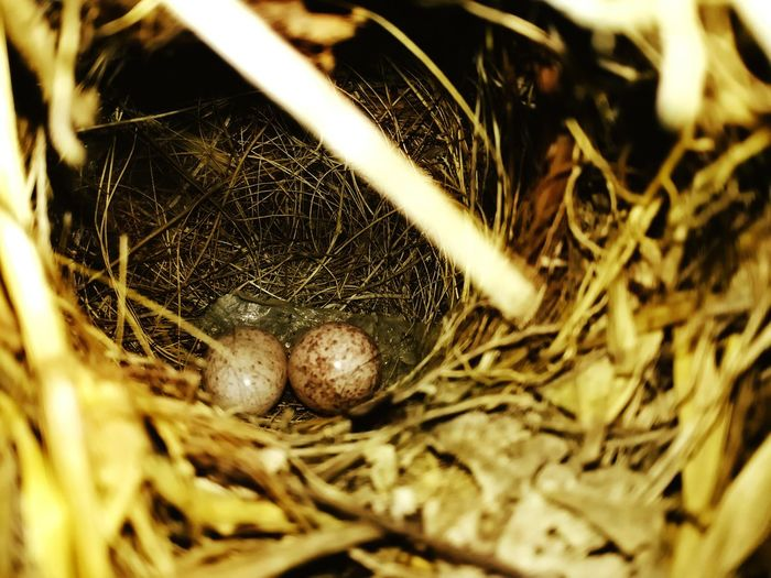 Animal Themes Nature Outdoors Fragility Animals In The Wild Close-up Bird Photography Bird Eggs Birds_collection Birds_n_branches Bird Eggs Photography Bird Egg Collection Bird Egg Hatching