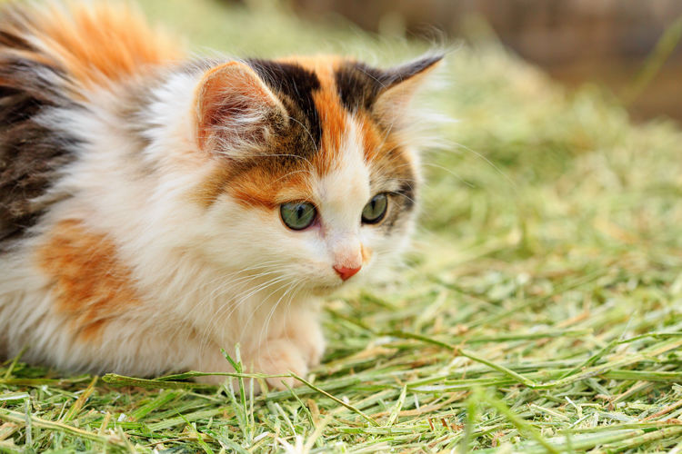Close-up of cat in the countryside