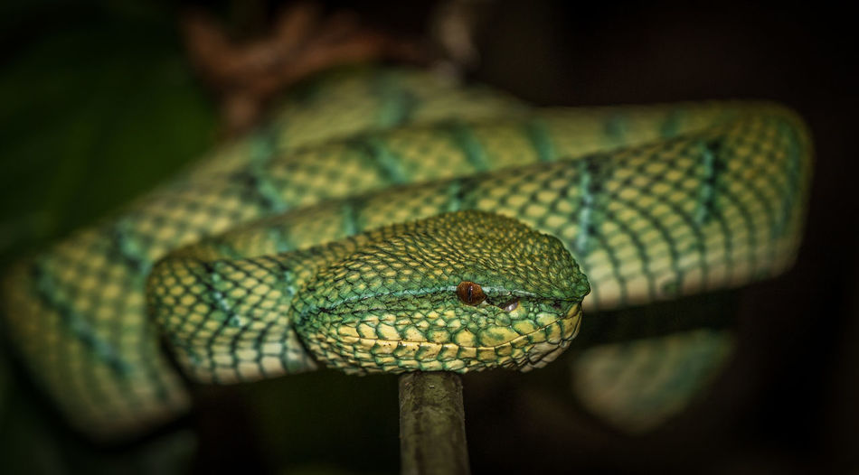 Close-up of snake on branch at night