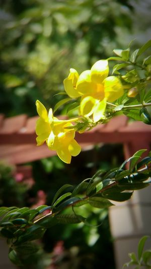 Beauty In Nature Blooming Close-up Day Flower Flower Head Fragility Freshness Growth Leaf No People Outdoors Plant Yellow