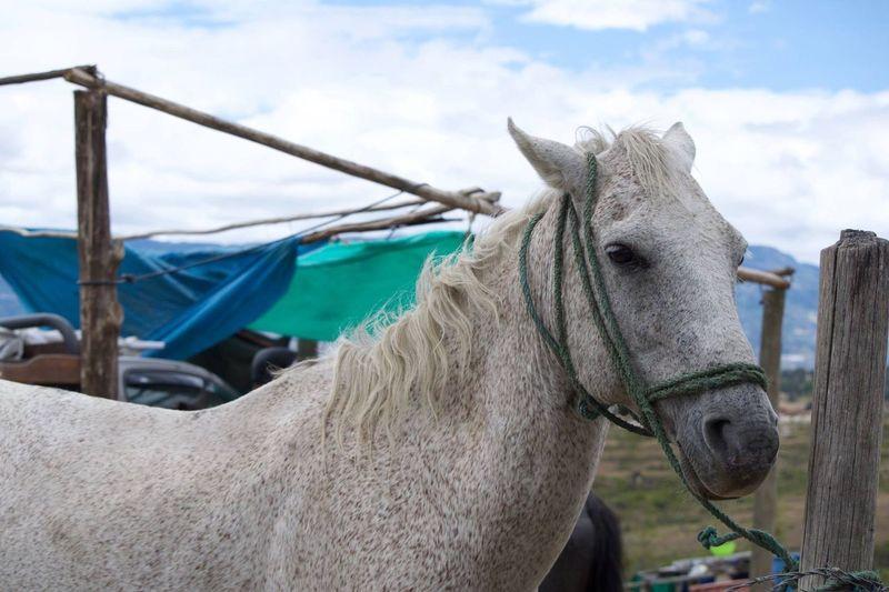 Animal Themes Sky Horse Animal Photography Nikon No People Sinfiltro 🐴
