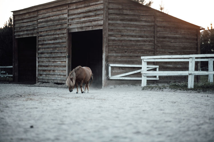 View of a horse in a barn