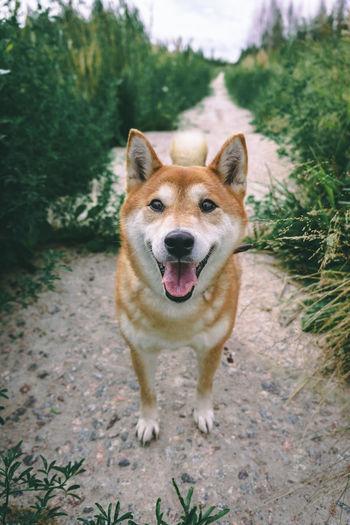 Portrait of dog standing on land