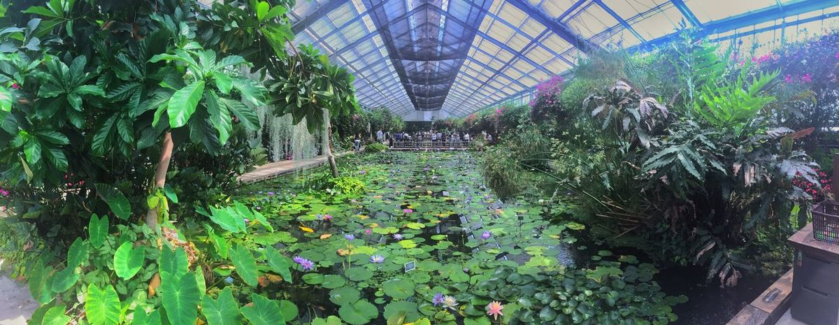 Plant Growth Greenhouse Leaf Green Color Nature Day Plant Nursery Agriculture Architecture Beauty In Nature No People Flower Outdoors Botanical Garden Freshness