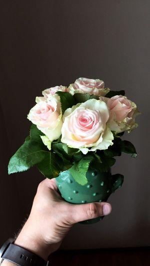 Roses Human