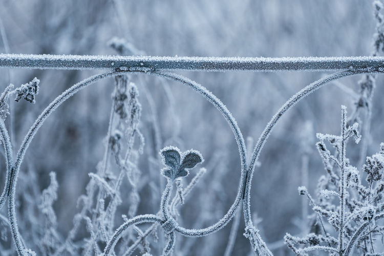 Close-up of frozen fence during winter