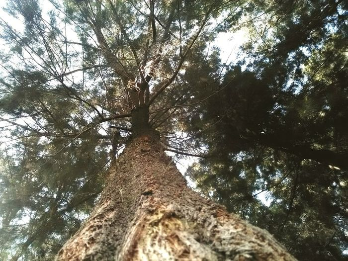 Lo mejor de estar bajo un árbol es mirar arriba Trees Parque  Enjoying Life Relaxing Cdmx Naturaleza