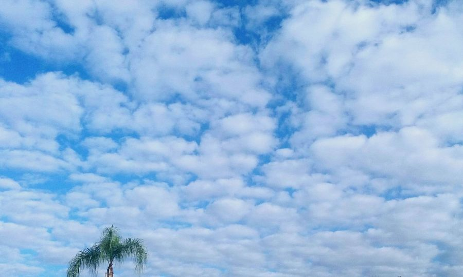Cloud - Sky Beauty In Nature Outdoors Nature CarmenVazquezPhotography MyPics Ocala Florida Eye4photography  Nature Photography Beauty In Nature Clouds In The Sky Skies And Clouds Beautiful Nature Carmenvazquezphotpgraphy Sky Eye4photography  Beautiful View ❤ Naturephotography Scenics Palm Tree No People