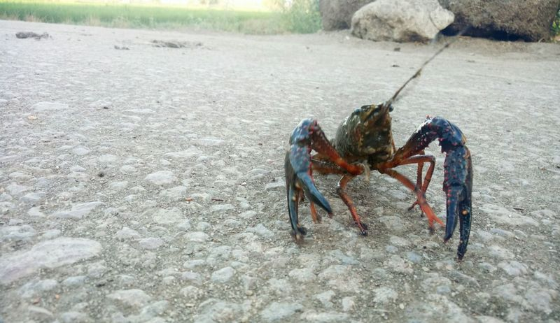 One Animal Animal Themes Animals In The Wild Beach Sand Day Sea Life Animal Wildlife No People Outdoors Nature Hermit Crab Close-up