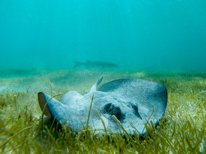 Beauty In Nature Blue Close-up Day Gopro Grass Green Color Idyllic Nature No People Non-urban Scene Outdoors Remote Rippled Scenics Snorkeling Stingray Tranquil Scene Tranquility Underwater Underwater Photography Water Feel The Journey