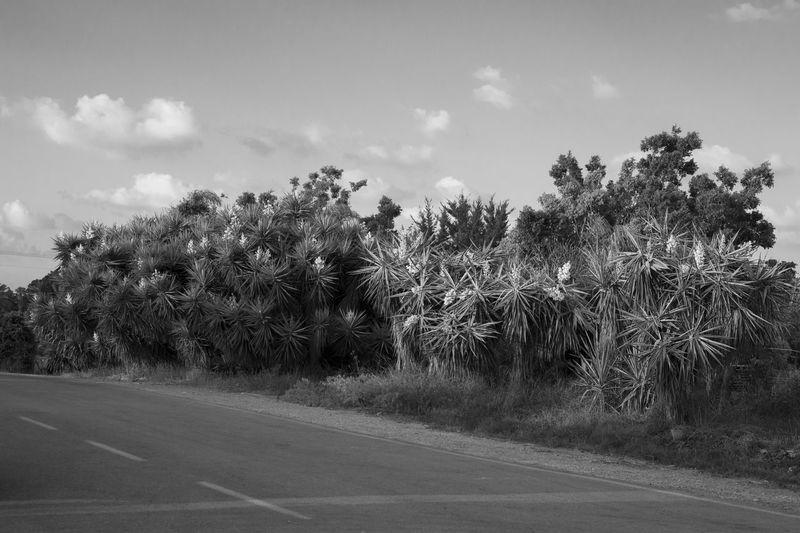 Trees growing on road against sky