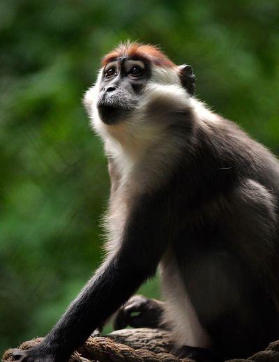 Close-up of monkey sitting on land