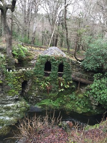 Check This Out Lookatthis Enjoying Life Nature Tollymore Forest Park Iseefaces Old