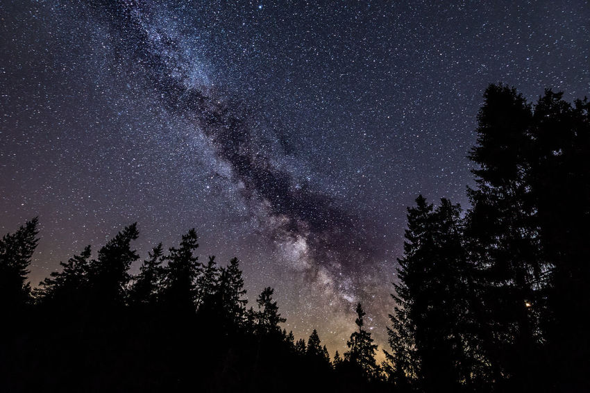 Die Milchstraße im Harz Harbor Astronomy Beauty In Nature Coniferous Tree Forest Galaxy Germany Harzmountains Low Angle View Milky Way Nature Night No People Plant Scenics - Nature Silhouette Sky Space Space And Astronomy Star Star - Space Star Field Tranquil Scene Tranquility Tree