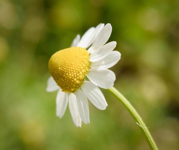Sunny - Iro