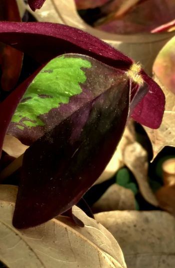 Leaf Winglike Realcolors Abstraction Studyinlowlife Feeling Inspired