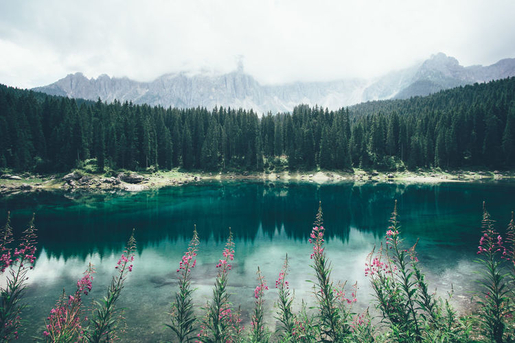 Scenic View Of Lake Carezza Against Trees