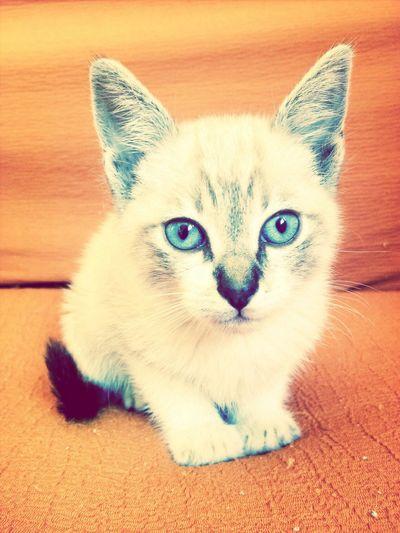 Fredy é o mais novo membro da familia :3
