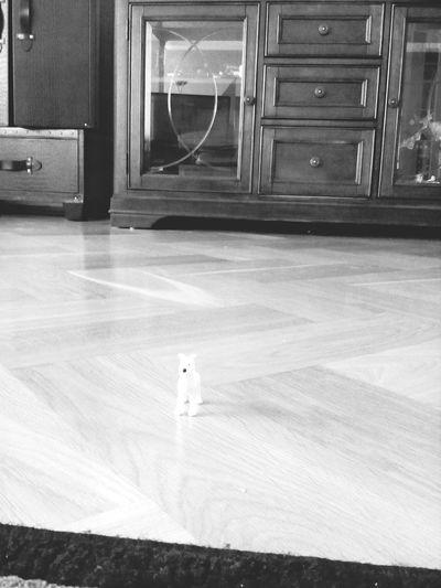 Dog❤ Hi! Cool Dog Taking Photos