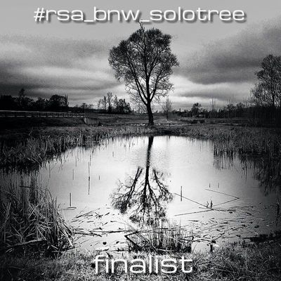 ▪rsa_bnw▫proudly presents the 5 finalists of the #rsa_bnw_solotree challenge! ▪thank you for your support and your amazing entries -- that's why we decided to nominate 5 finalists! ▫ pls vote for your favourite shot(s). vote closes on monday, april 1st 20 Black_white Rsa_bnw Noir Bnw_life Blackandwhite Blackandwhiteonly Black And White Ig_snapshot Bw_lover Bestshooter Bw_love Eclecticphotos Bnw_society Blackandwhitephoto Bw_lovers Eclectic_bnw Blackandwhitephotography Rsa_bnw_solotree Insta_pick_bw Bnw_demand Bw_crew Noirlovers Ic_bw Royalsnappingartists Most_deserving_bw
