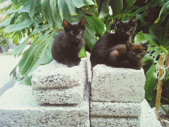 Cats Cat Black Cats Cat Watching