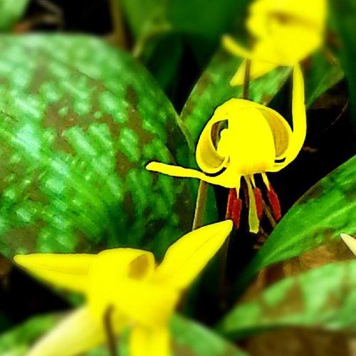 Weldon parkArva Spring Flower