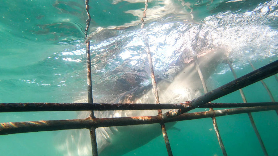 Shark Activity