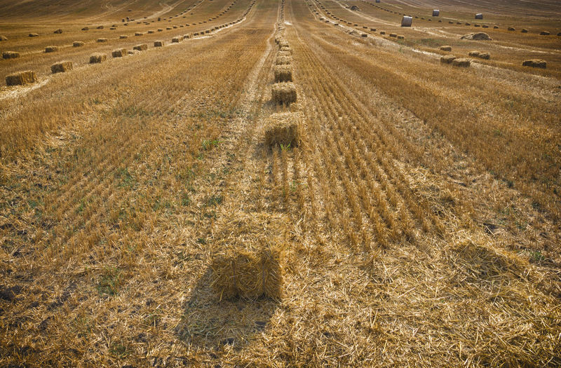 Hay Bales In Rows On Landscape