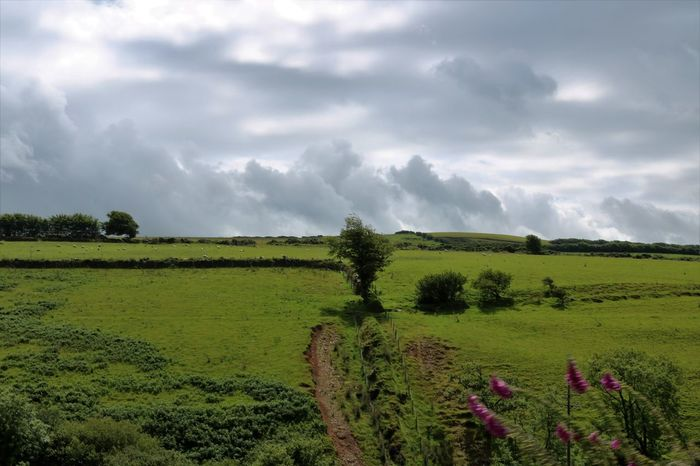 Clouds over Exmoor Relaxing Taking Photos Depth Of Field Green Fields TheVille Streamzoofamily Streamzoofamily Friends Somerset England Walk This Way Nature_collection Eye Em Nature Lover Naturephotography EyeEm Best Shots - Nature Connected With Nature Nature On Your Doorstep The Essence Of Summer Sky And Sea Nature The Greatest Artist Green Nature Hugging A Tree Cloud Porn Nature's Diversities