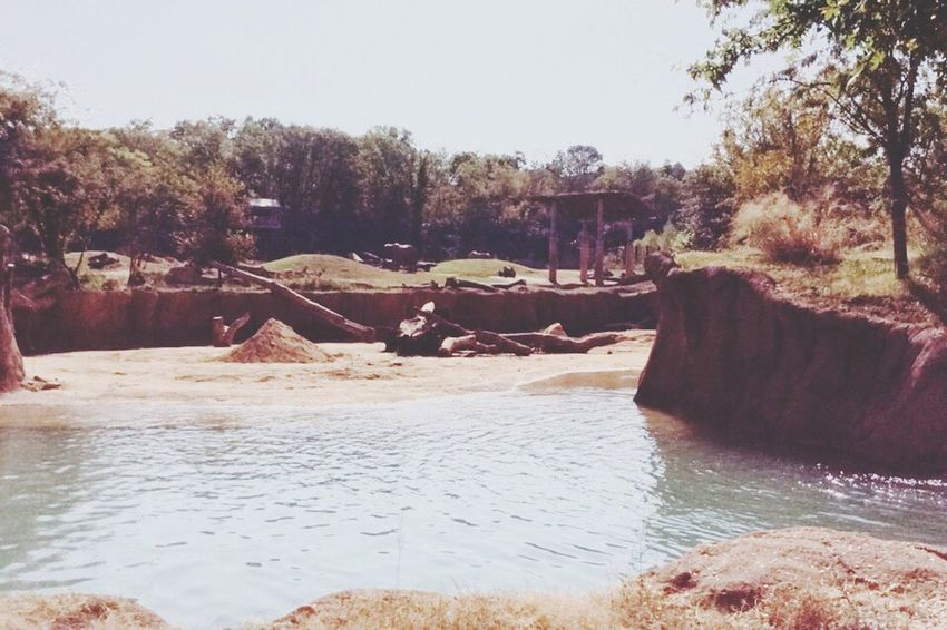 Elephant ♥ Elephant Habitat EyeEm Nature Lover Exploring Worlds Habitats Dallas Zoo Landforms Hidden Beauty