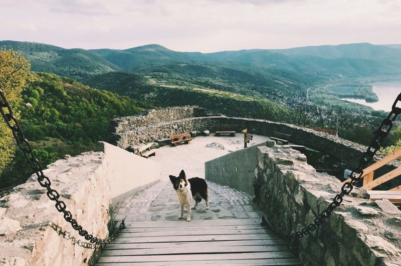 High angle view of dog amidst mountains against sky