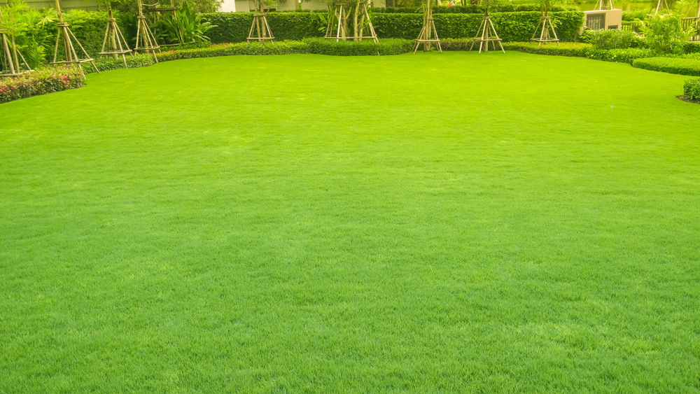 green lawn,backyard for background American Football Field Beauty In Nature Day Golf Golf Course Grass Green - Golf Course Green Color Nature No People Outdoors Playing Field Racket Sport Soccer Soccer Field Sport Stadium Turf