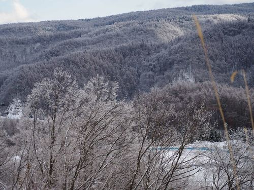 雨氷の山… 八ヶ岳山麓 雨氷 信州 Nagano, Japan EyeEm Nature Lover Nature 冬の景色 Tree 木 冬空
