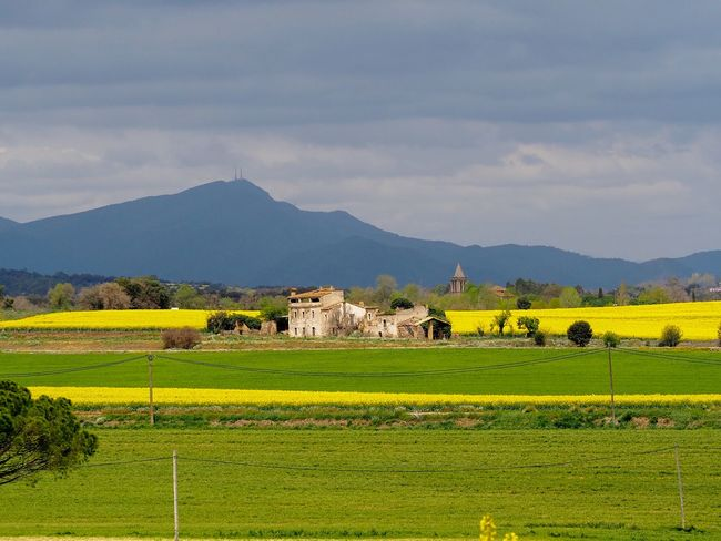 S Girona Environment Plant Mountain Land Field Agriculture Scenics - Nature Rural Scene Nature Beauty In Nature Tranquil Scene Grass Mountain Range