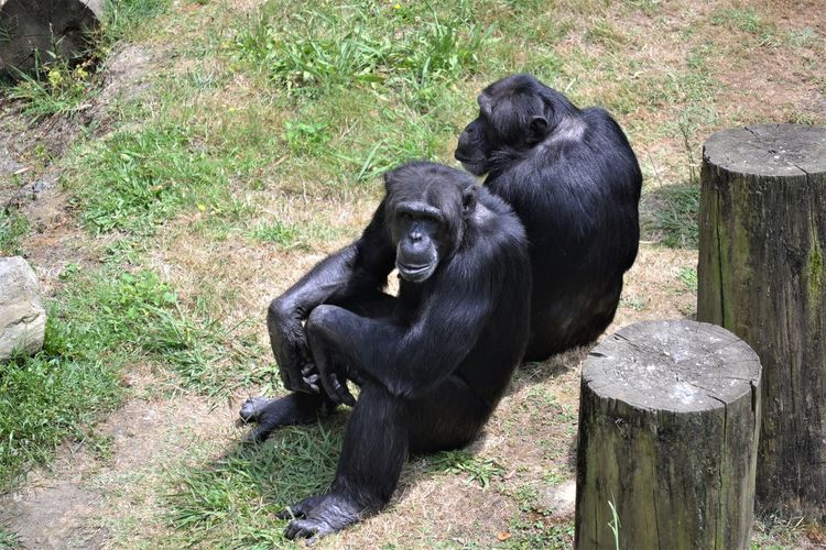 Black sitting on grass