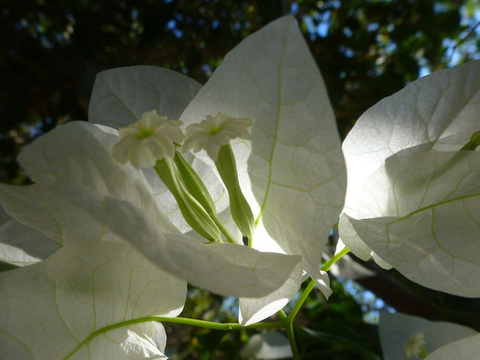 Close-up of white flower in garden