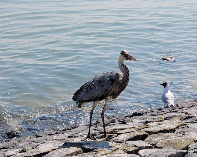 Birds perching on rock in sea