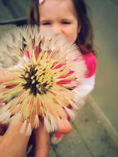 Close-up of girl holding pink flower