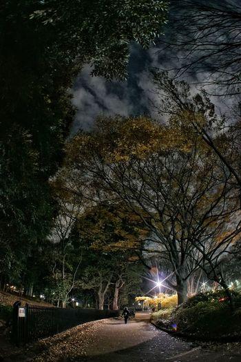 代々木公園沿いの道 Night Walk Parkside Way Night Night Photography Sky And Trees Night Lights One Person The Way Forward Hello World Enjoying Life Taking Photos Iso12800 Sony A7sii Fish Eye Takumar 17mm/F4 EyeEm Best Shots EyeEmBestPics