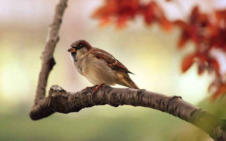 Animal Themes Animal Wildlife Animals In The Wild Beauty In Nature Bird Branch Close-up Day Focus On Foreground Nature No People One Animal Outdoors Perching Sparrow