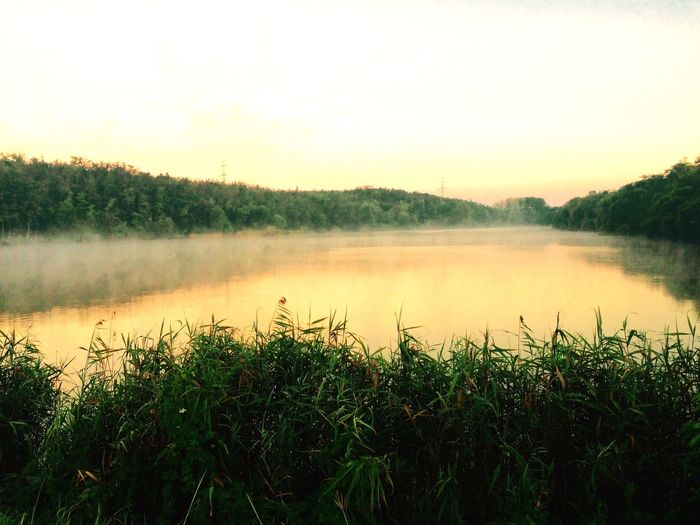 Water Tranquility Beauty In Nature Lake Scenics Growth Plant Nature Sunset Idyllic Environment Green Color Majestic Fog