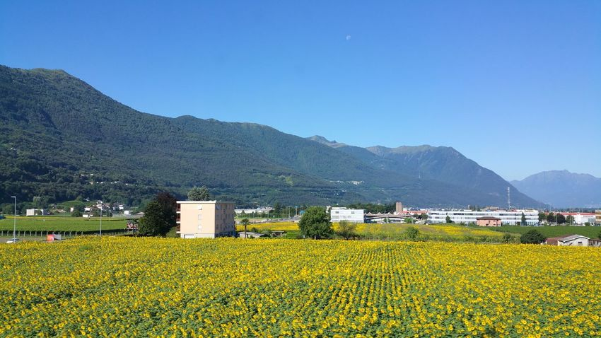Swiss Sce Agriculture Mountainnery Field Farm Landscape Crop  Rural Scene Plant Tree Mountain Range Nature Outdoors Tea Crop Growth Day Clear Sky Architecture Cereal Plant Scenics Sky