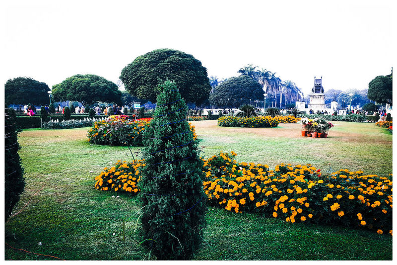 Scenic view of flowering plants in park against clear sky
