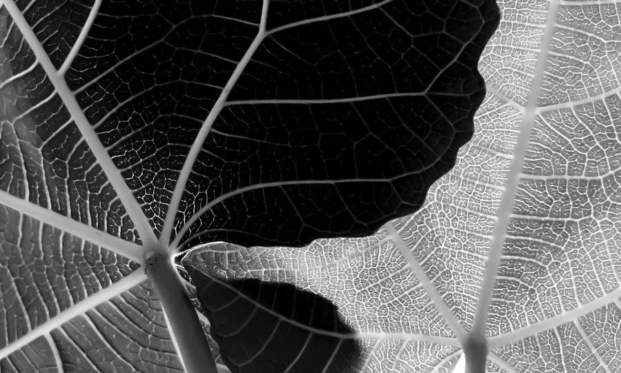 #EyeEmEsterlinda #italy Backgrounds Beauty In Nature Black & White Blackandwhite Blackandwhite Photography Botany Detail Nature